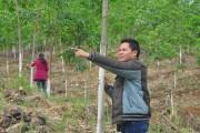 Tăng phí dịch vụ môi trường rừng từ thủy điện