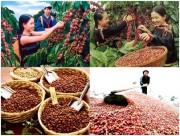 Nhập khẩu thực phẩm của Algeria tăng trong 9 tháng đầu năm 2017
