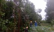 PC Quảng Nam tích cực khôi phục cấp điện do bão số 12