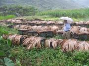 Phát triển nghề nuôi ong mật bền vững