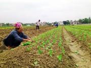 Quảng Bình: Vùng lũ cần hỗ trợ hạt giống
