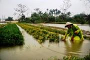 Sớm khôi phục phát triển sản xuất sau mưa lũ
