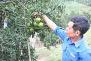 Lai Châu: Biến đồi hoang thành trang trại màu mỡ