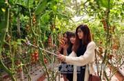 Du lịch canh nông thu hút du khách đến Đà Lạt
