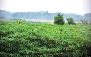 Sản xuất xăng E5: Hàng vạn nông dân hưởng lợi