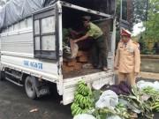 Thừa Thiên Huế: Bắt giữ vụ vận chuyển gỗ lậu