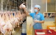 Năm 2017 Việt Nam sẽ xuất khẩu thịt gà sang Nhật Bản, EU