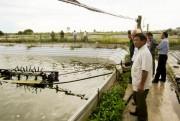 Hải Phòng định hướng nuôi trồng thủy sản kỹ thuật cao