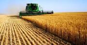 Giá lương thực, thực phẩm toàn cầu tháng 1 tăng cao nhất trong vòng 2 năm qua