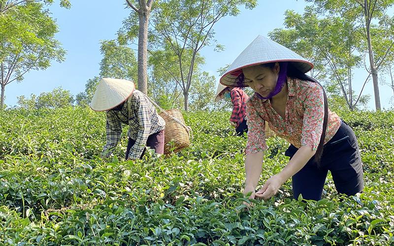 Phú Thọ khơi thông dòng sản phẩm OCOP