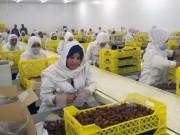 Algeria công bố danh các doanh nghiệp xuất khẩu