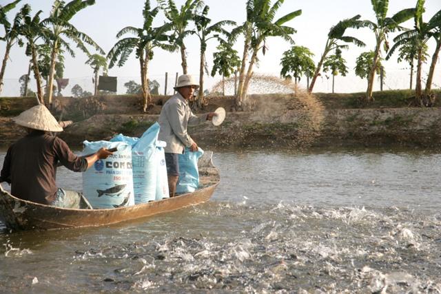 Kết quả hình ảnh cho chăn nuôi thủy sản