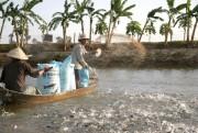 Khuyến khích không sử dụng kháng sinh trong thức ăn thủy sản