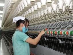 Xây dựng nhà máy kéo sợi len lông cừu 50 triệu USD ở Đà Lạt
