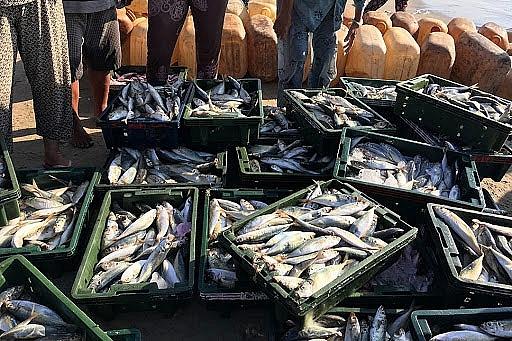 Đối xử đặc biệt và khác biệt đối với khai thác IUU được chú trọng trong đàm phán thủy sản
