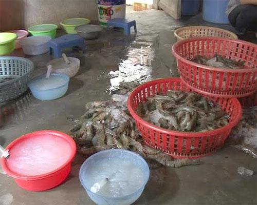 Thừa Thiên Huế: Phát hiện hai cơ sở kinh doanh thủy sản bơm chất lạ vào tôm sú