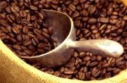 Xuất khẩu cà phê sang Algeria đạt gần 56 triệu USD