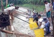 Tiền Giang: Dự kiến sẽ có 20 hộ nuôi tôm, cá đạt VietGAP vào cuối năm nay