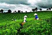 Xuất khẩu 5 tháng của Việt Nam sang Pakistan tăng 24,9% so với cùng kỳ