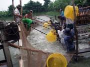Một số giải pháp cho vụ nuôi cá tra cuối năm