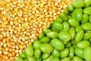 Algeria mở rộng áp dụng giấy phép nhập khẩu