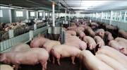 Bộ NN&PTNT lập đường dây nóng tố giác sử dụng chất cấm trong chăn nuôi