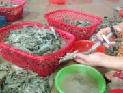 Hà Nội: Bơm bột vào tôm để tăng trọng lượng