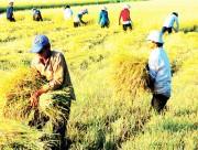 """Agritrade: Hiệu quả từ """"Nhịp cầu nông sản"""""""