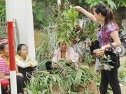 Tây Nguyên: Nguy cơ xóa sổ lan rừng