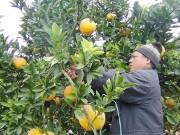 """""""Vương quốc""""cây ăn quả đặc sản"""