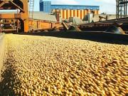 Nông nghiệp của Braxin: Tiềm năng lớn đậu tương