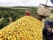 Hai nhân tố thúc đẩy kinh tế Mỹ Latinh 2015