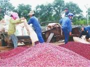 Xuất khẩu vào Ả-rập Xê-út: Chủ quan sẽ mất thị trường