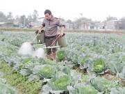 Xây dựng nông thôn mới: Nông dân là chủ thể