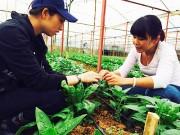 Vĩnh Phúc: 700 tỷ đồng đầu tư dự án sản xuất rau công nghệ cao