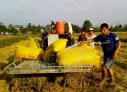 Đồng bằng sông Cửu Long thu hoạch vụ Đông - Xuân: Phấn khởi với giá lúa tăng