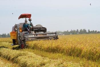 Giá lúa gạo hôm nay ngày 3/2: Giá lúa giảm, giá gạo xuất khẩu bật tăng