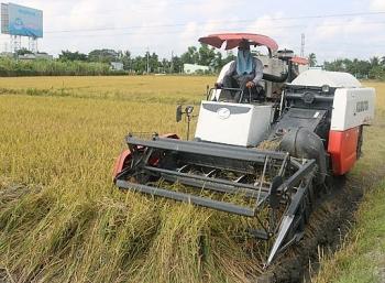 Giá lúa gạo hôm nay ngày 26/2: Giá lúa gạo đi ngang, thị trường giao dịch chậm