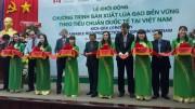 Khởi động chương trình sản xuất lúa gạo bền vững tại Việt Nam