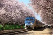 Rực rỡ những mùa hoa anh đào trên thế giới