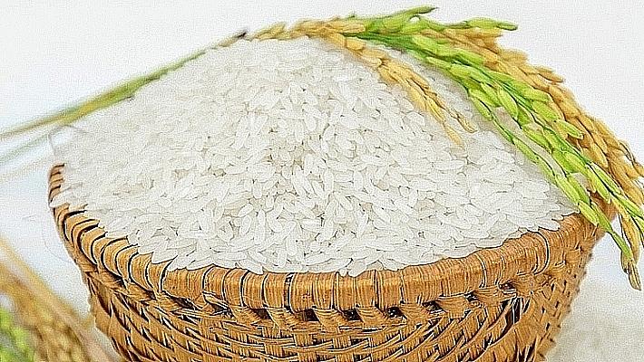 Giá lúa gạo hôm nay 3/4: Giá lúa tiếp tục giảm mạnh 200 đồng/kg