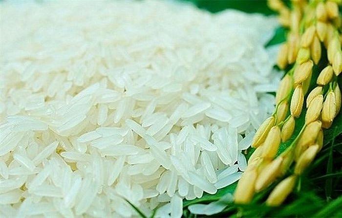 Giá lúa gạo hôm nay 5/4: Giá lúa gạo ổn định