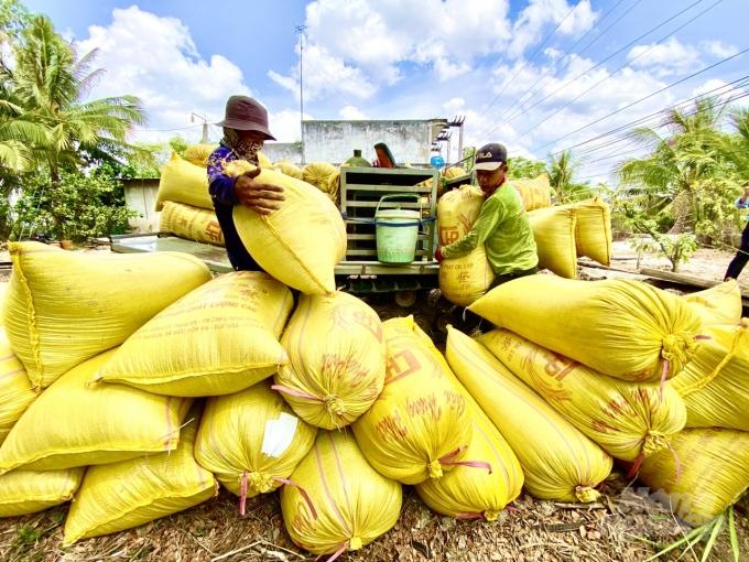Giá lúa gạo hôm nay 10/5: Đầu tuần giá gạo tăng giảm trái chiều