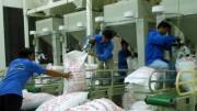 Xuất khẩu gạo, thủy sản An Giang khởi sắc