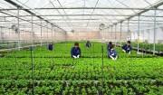 200 tỷ đồng được tài trợ cho chương trình Khởi nghiệp Xanh trên quê hương Việt Nam