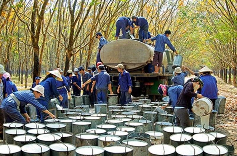 Việt Nam xuất khẩu 120 nghìn tấn cao su trong tháng 7
