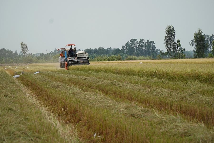 Để chuỗi ngành hàng lúa gạo không đứt gãy