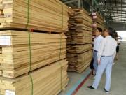 Khai trương Trung tâm phân phối gỗ nguyên liệu nhập khẩu lớn nhất Việt Nam