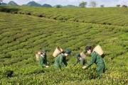 Vinatea quay lại thị trường trà nội địa sau nhiều năm tập trung xuất khẩu