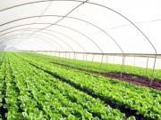 Bộ Nông nghiệp gấp rút hoàn thiện thể chế, quy chế quản lý thực phẩm